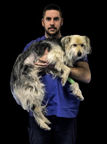 Dott. Matteo Brambilla Medico Chirurgo Veterinario